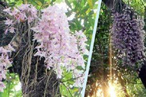 हरेक बर्षको 'बैशाख '१ गते' मात्रै फूल्ने फूल र यस्को रहस्य