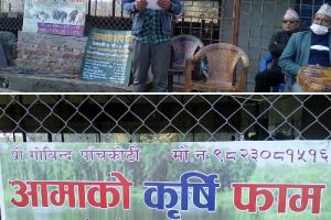 विदेशबाट फर्किएर कृषि क्षेत्रमा लगानी,बेलबारीका कृषक गोविन्द पाँचकोटीको सफलताको कहानी
